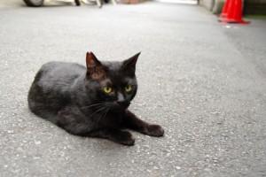 スタジオリボレの前の猫